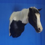 black and white horse shoulder taxidermy