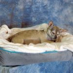 Taxidermy little dog
