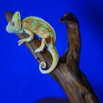 gecko pet taxidermy
