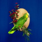 green and yellow bird taxidermy