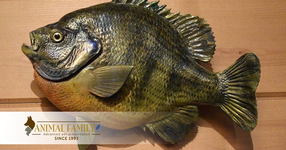 Taxidermy fish