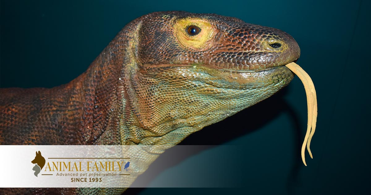Taxidermy Reptile