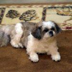 Molly the dog