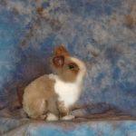 bunny taxidermy