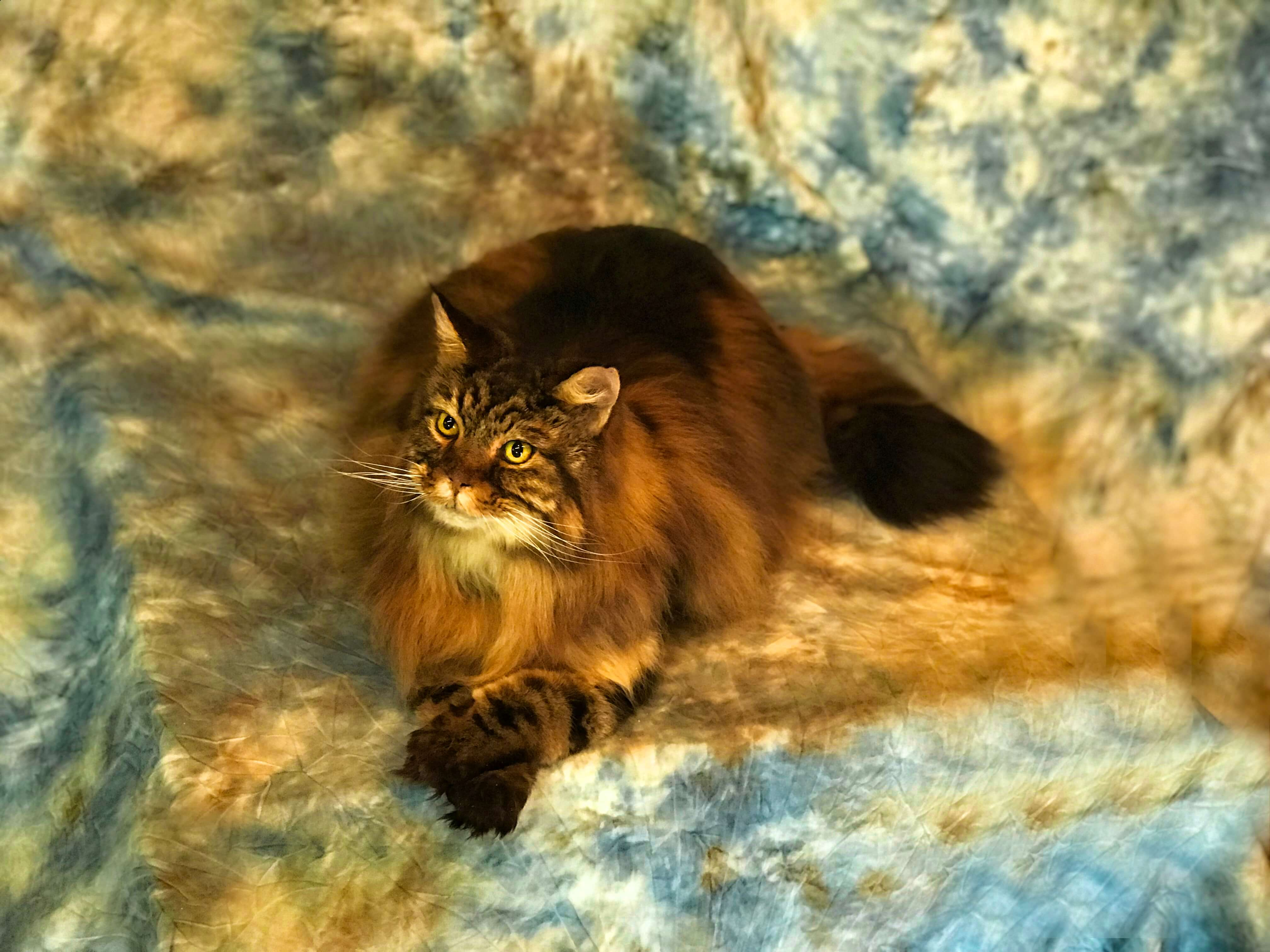 Cat Taxidermy Services | Freeze Dried Cats