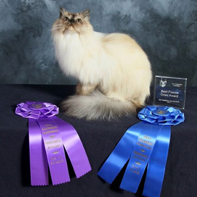 award winning cat taxidermy