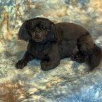 dog taxidermy
