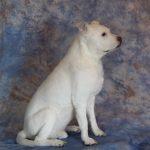 white freeze dried dog