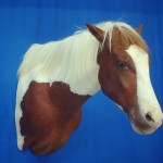 brown and white horse shoulder taxidermy