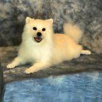 white dog mount