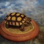 tortoise pet taxidermy