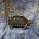 turtle pet taxidermy