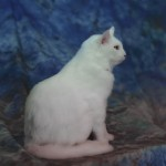 white cat taxidermy