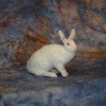 rabbit pet taxidermy